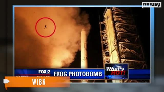 NASA_Launches_Frog_Toward_Space_by_Accident.jpg