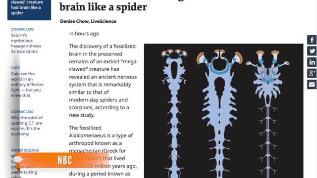 Fossilized_Arthropod_Has_Spider-Like_Brain.jpg