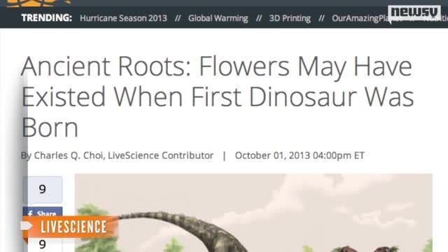 Scientists_Find_Evidence_of_1st_Flower__Lived_With_Dinosaurs.jpg
