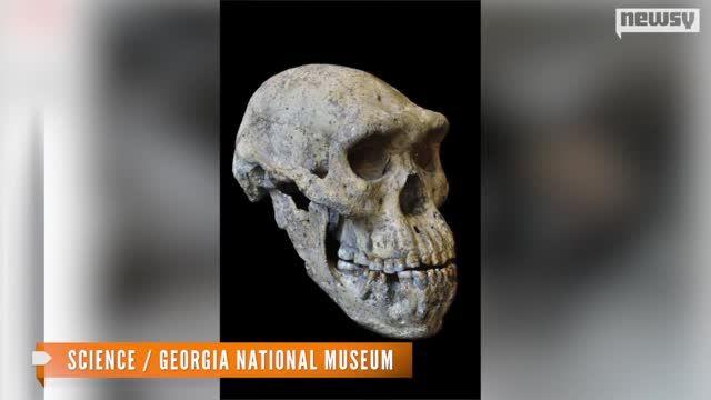 Skull_Fossil_May_Simplify_Story_of_Human_Evolution.jpg