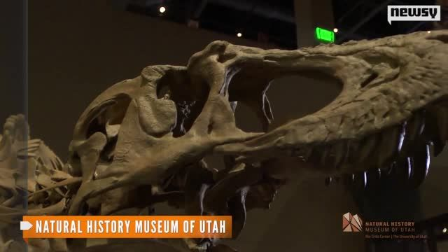 Scientists_Discover_a_Relative_of_T._Rex_.jpg