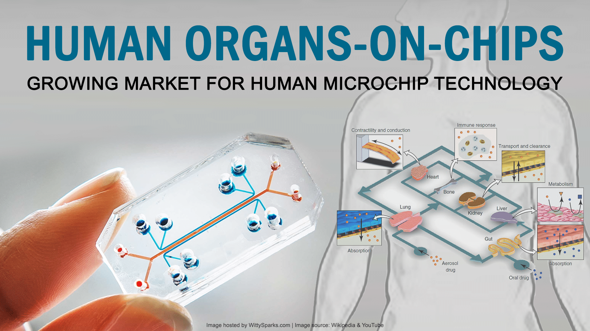 Organ Microchip Applications, Challenges and Future